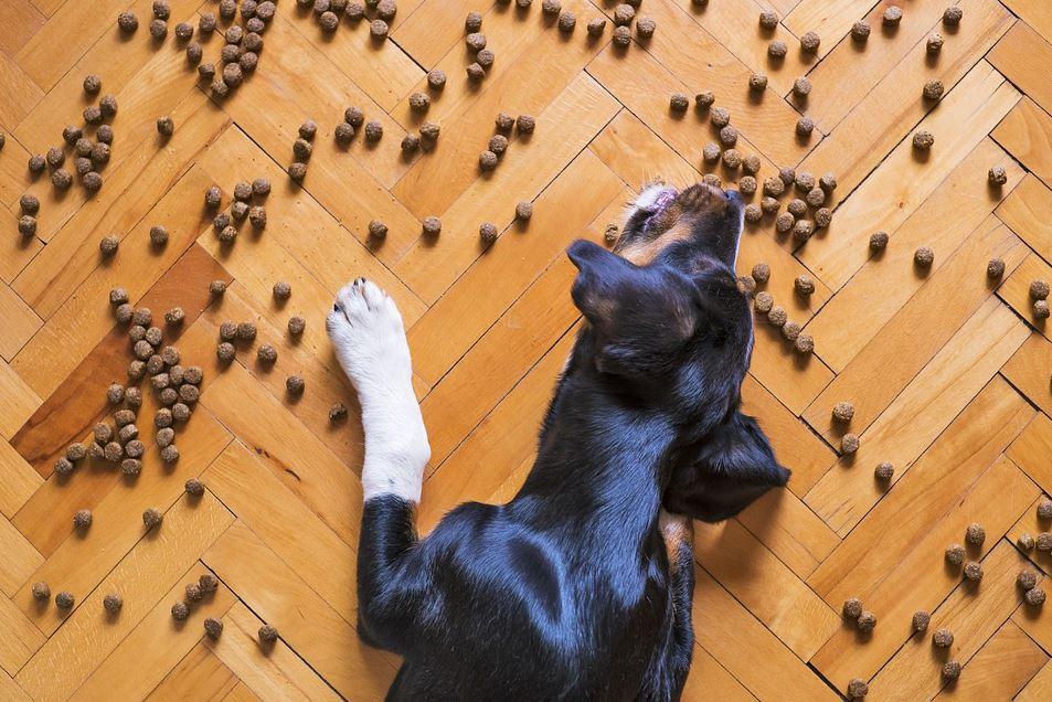 Natürliches Hunde Trockenfutter mit hohem Fleischanteil